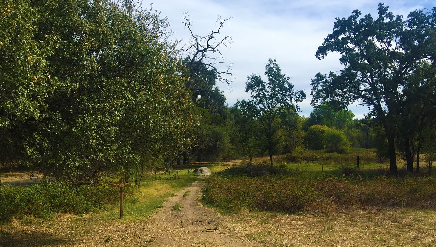 Photograph of dirt trail path and foliage at Traylor Ranch
