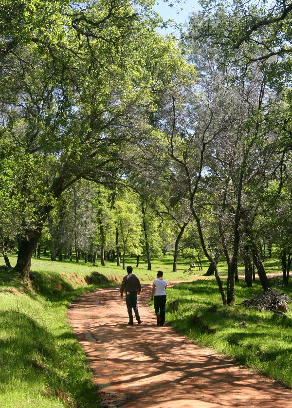 Two People Walking on a Dirt Trail Surrounded by Green Trees and Lush Grass