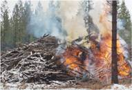 Wood Pile on Fire